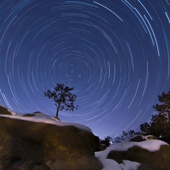 photo of star trails and a tree